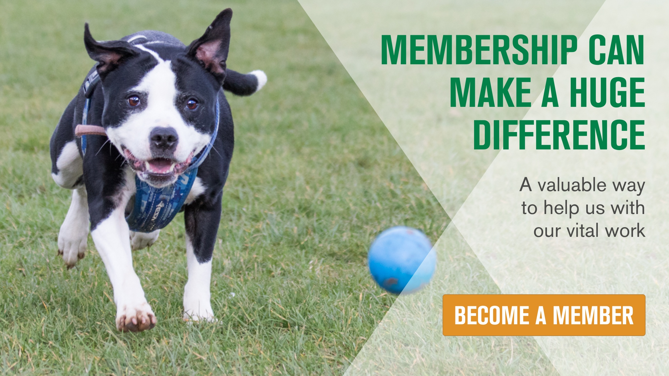 See the huge number of ways your membership could make a difference